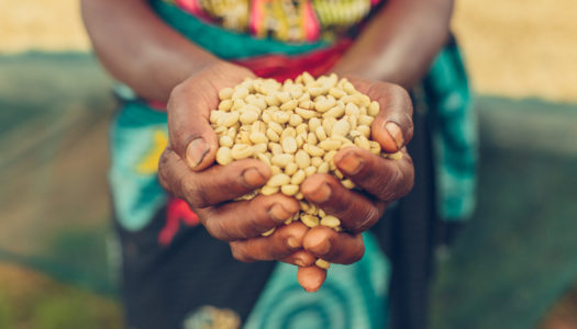 The Kula Project On Why Listening Creates Powerful Opportunity For Farmers in Rwanda