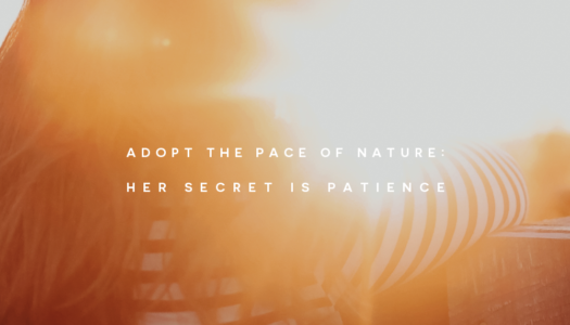 Adopt the pace of nature: her secret is patience