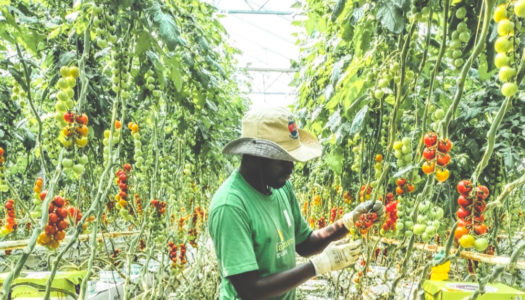 How a Social Enterprise Fights Poverty through Smart Farming